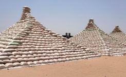 1st National Maize Pyramid: Nigeria Farmers promise high produce, urge FG to sustain import ban